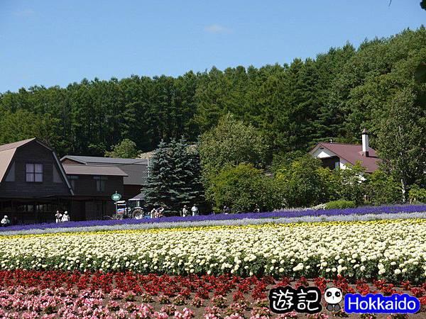 富良野FLOWER LAND花田46