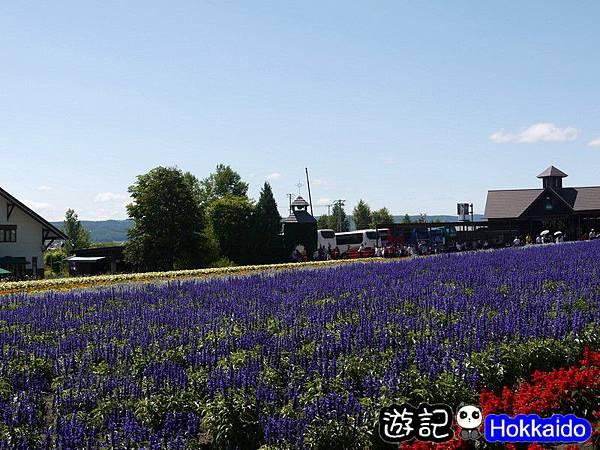富良野FLOWER LAND花田47