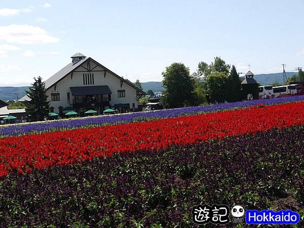 富良野FLOWER LAND花田51