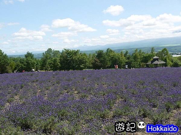富良野FLOWER LAND花田52