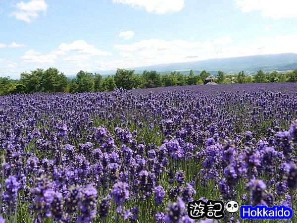 富良野FLOWER LAND花田53