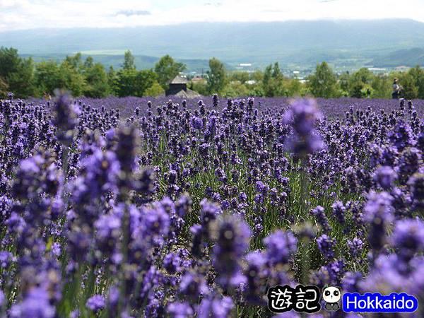 富良野FLOWER LAND花田55