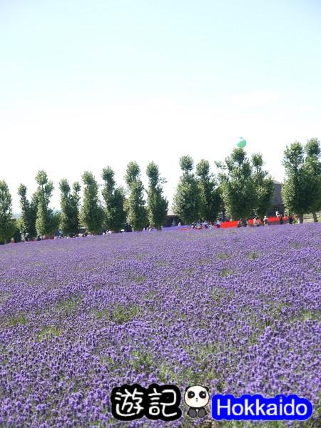 富良野FLOWER LAND花田58