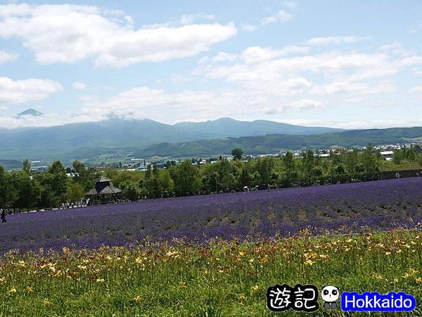 富良野FLOWER LAND花田60