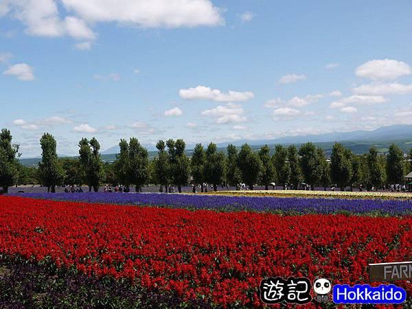 富良野FLOWER LAND花田62