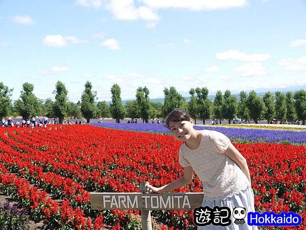 富良野FLOWER LAND花田63