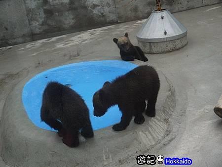 昭和新山熊牧場16