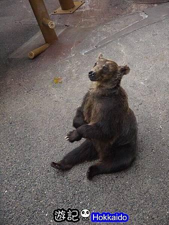昭和新山熊牧場17