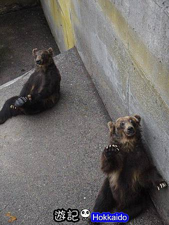 昭和新山熊牧場20