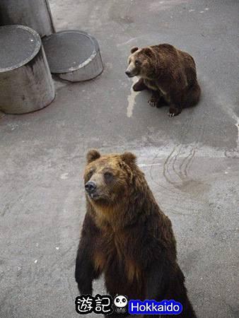 昭和新山熊牧場22