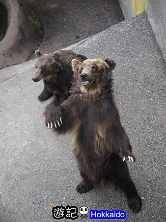 昭和新山熊牧場21