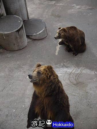 昭和新山熊牧場23