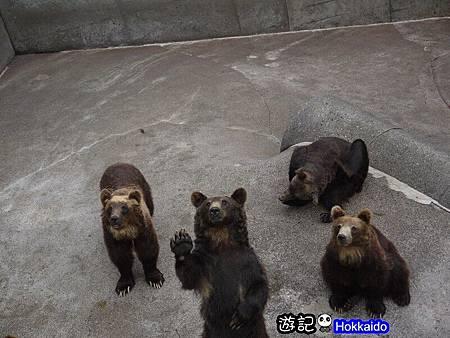 昭和新山熊牧場31