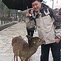 奈良東大寺23.jpg