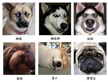 狗狗與主管.jpg