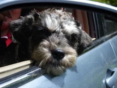 坐車車看風景吹吹風.JPG