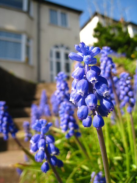 spring Bham (1).JPG