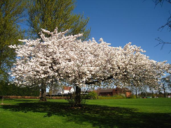 spring Bham (2).JPG
