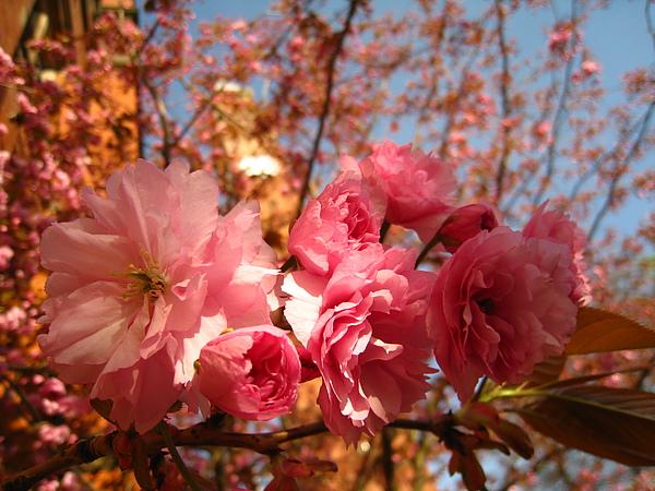 spring Bham (3).JPG