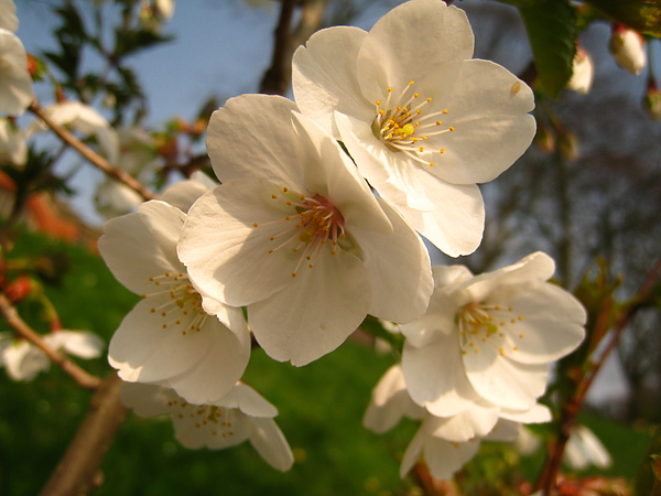 spring Bham (5).JPG