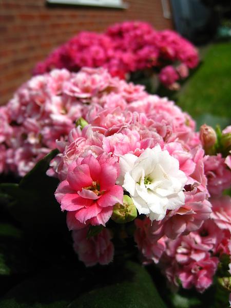 spring Bham (52).JPG