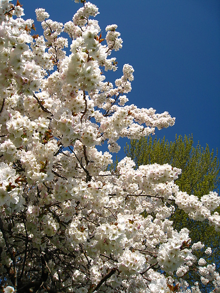spring Bham (88).JPG