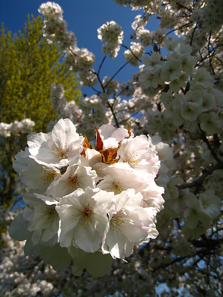 spring Bham (92).JPG