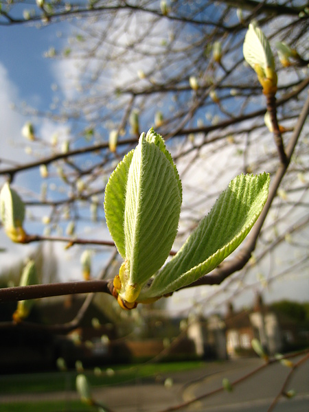 spring Bham (301).JPG