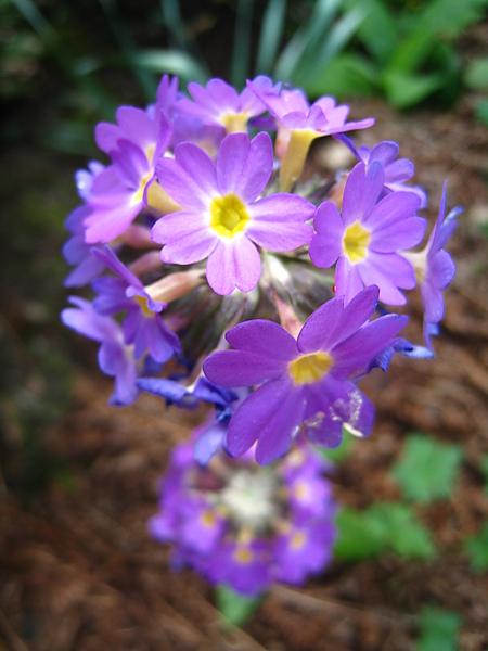 spring Bham (347).JPG