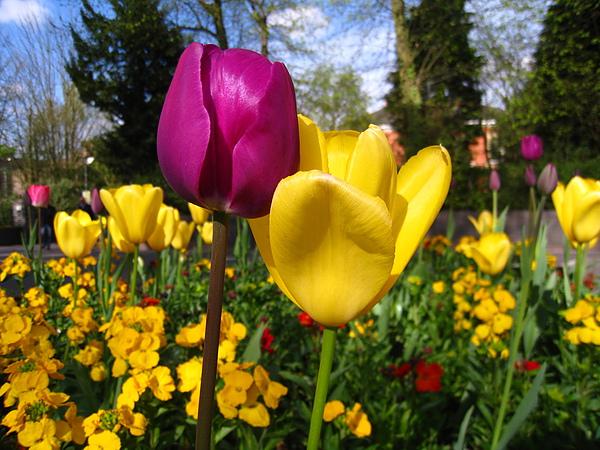spring Bham (361).JPG
