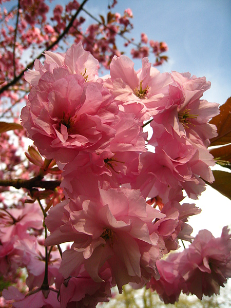 spring Bham (366).JPG