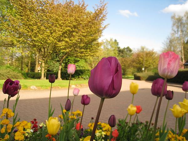 spring Bham (400).JPG