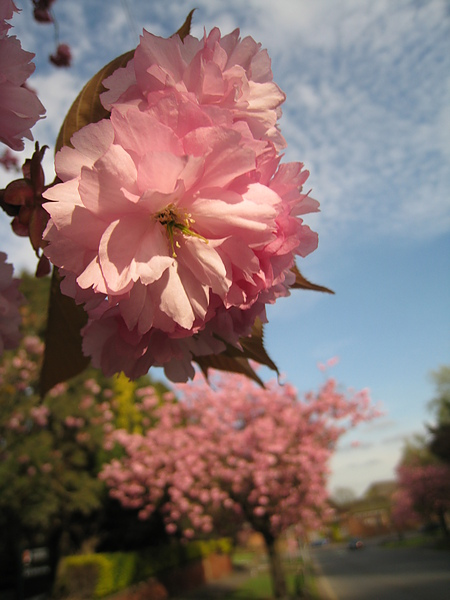 spring Bham (430).JPG
