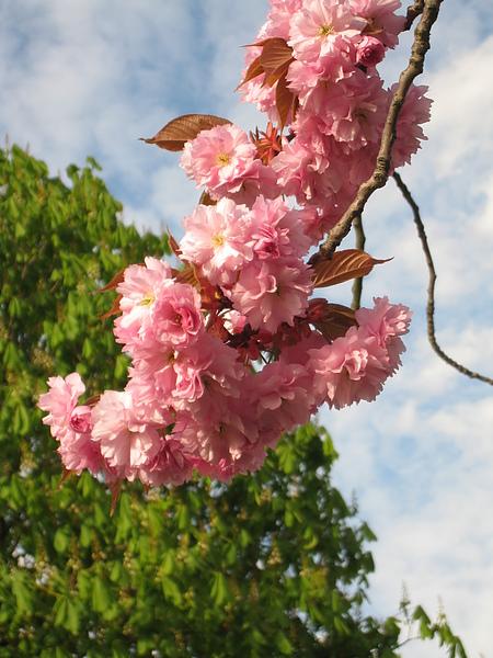 spring Bham (450).JPG