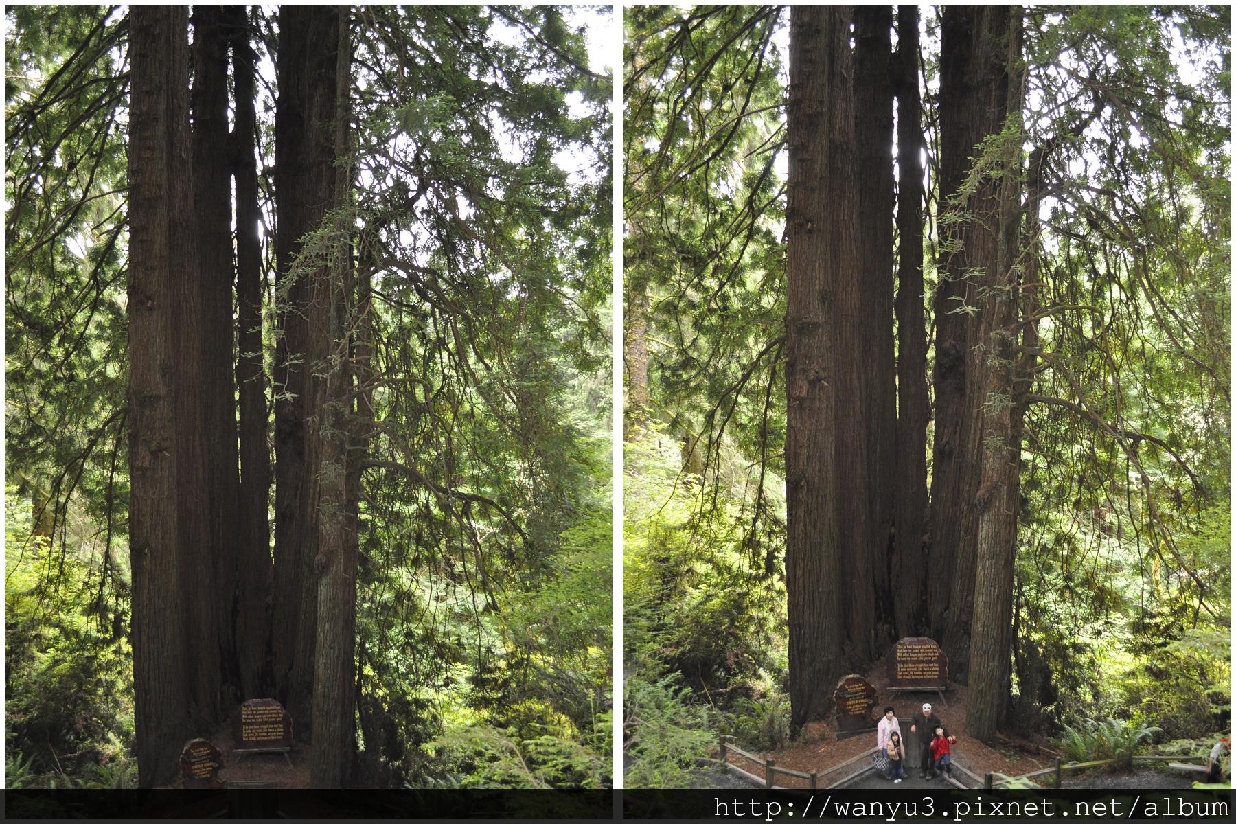 temple tree.jpg