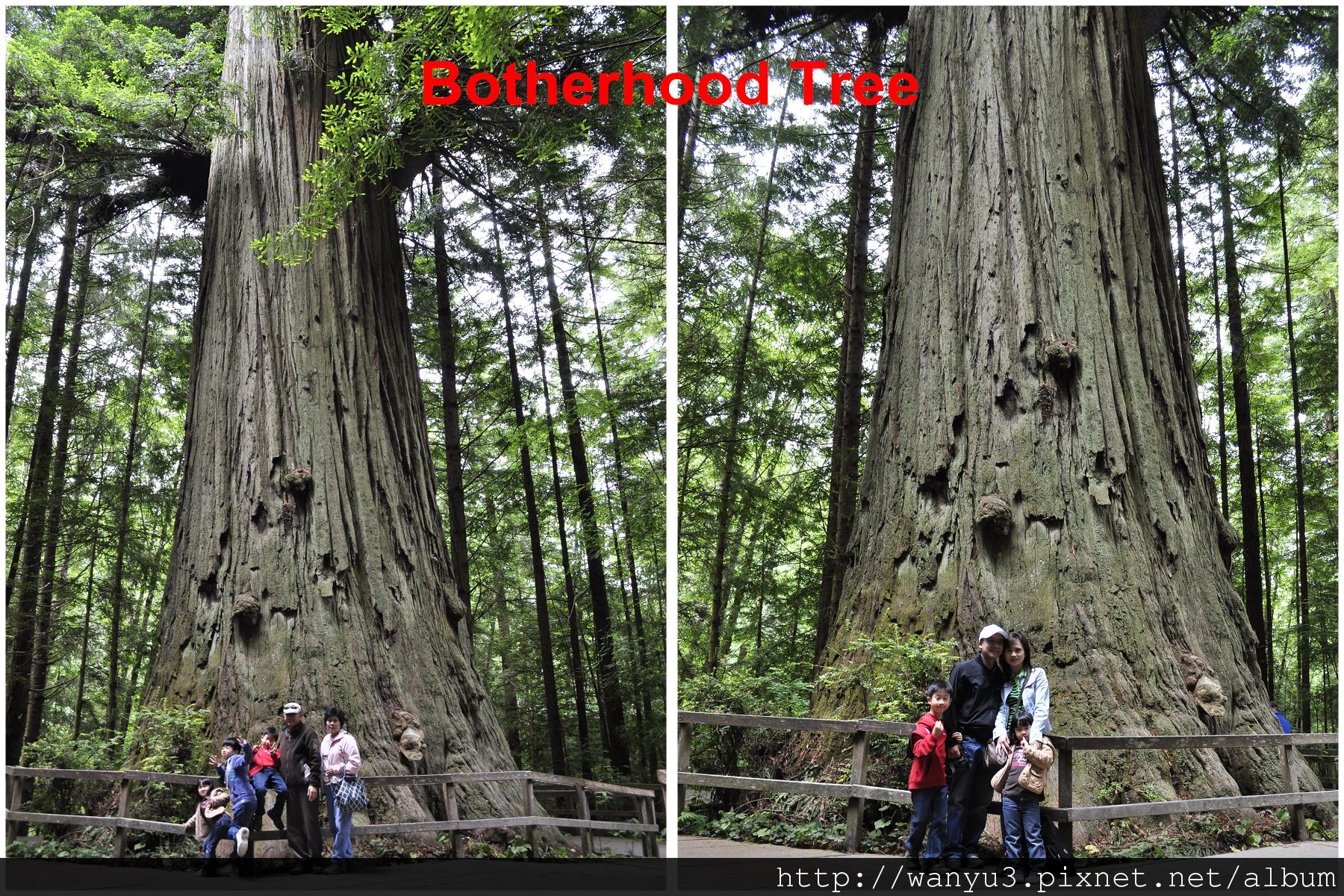 _TREES.jpg