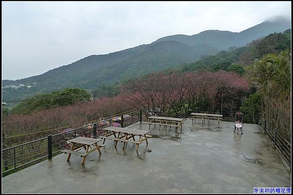 冬末初訪櫻花季.jpg