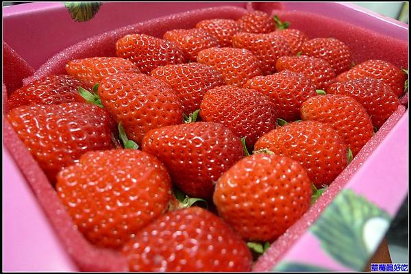 草莓季節來囉.jpg