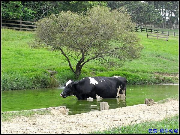 發現有隻牛牛在喝水.jpg