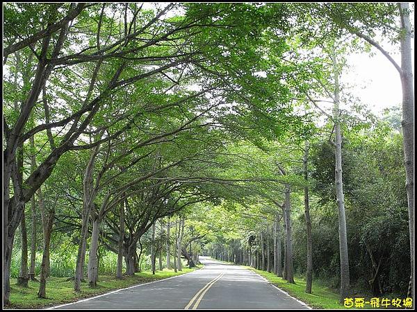 往飛牛牧場的綠色大道.jpg