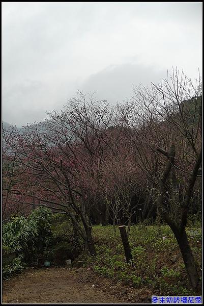 結果天氣太冷...櫻花還沒盛開呢.jpg