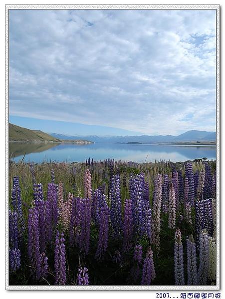 蒂卡波湖-有魯冰花的相襯,蒂卡波湖真的美.jpg