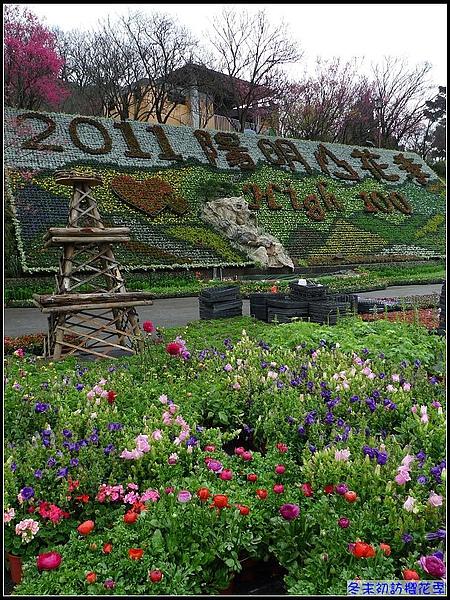 2011年陽明山花季即將展開.jpg