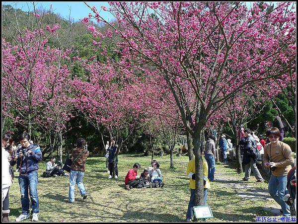有陽光.有櫻花...就會有人潮....jpg