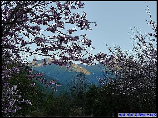 早晨的武陵空氣乾淨...山景迷人.jpg