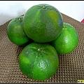 綠滋滋的橘子.jpg
