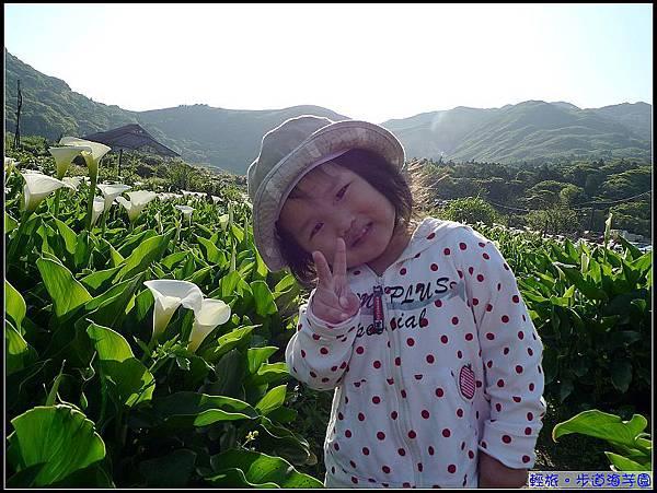 早起的妞今天認識了新花卉-海芋.jpg