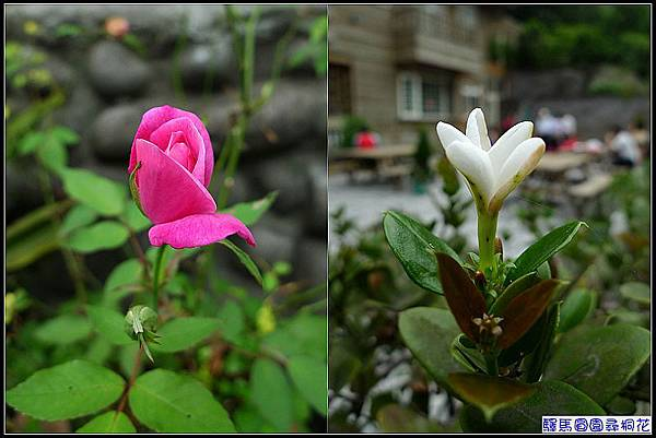 花朵1.jpg