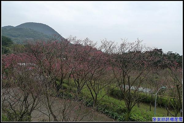 期待下回造訪時...櫻花盛開.jpg