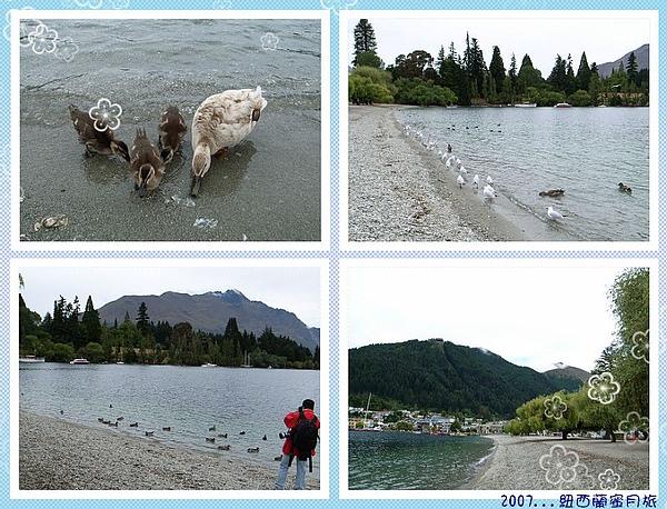 皇后鎮-湖畔乾淨野鴨.海鷗超多.jpg